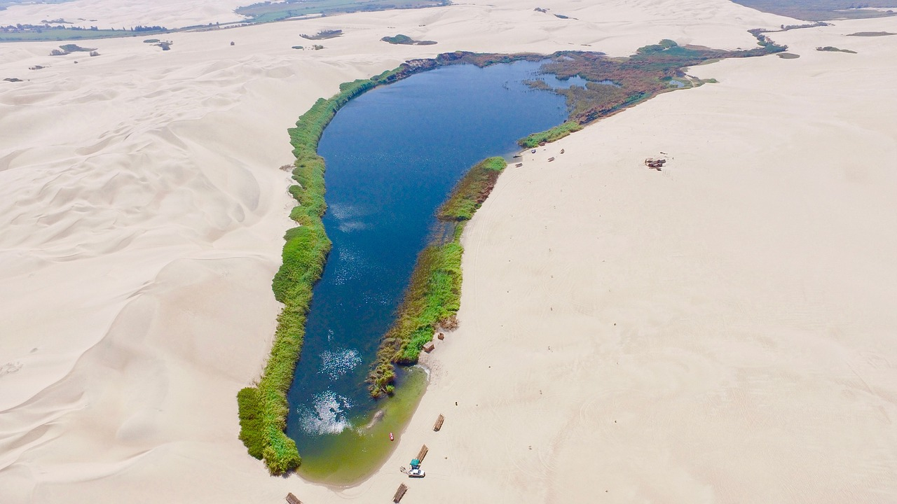 RootyRUG v poušti plné hladkých prken